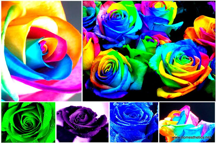 Learn-How-To-Make-Simple-Colored-and-Rainbow-Roses-Step-by-Step-DIY-Project