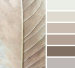 Mood board taupe colors inspired by a leaf
